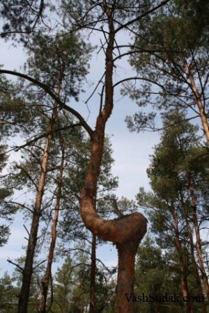 Природа Судака. Фото