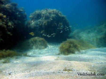 Подводный мир Черного моря. Фото