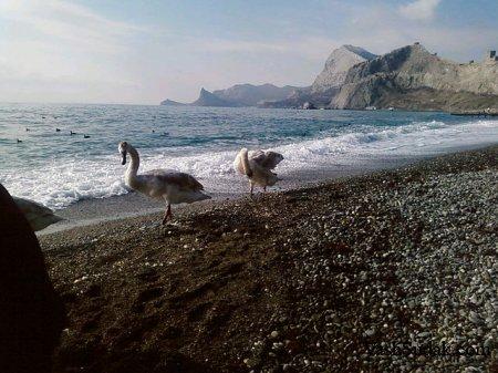 Генуэзцы в Судаке