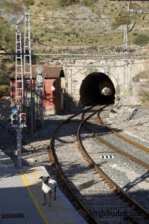 Нечто из тоннеля