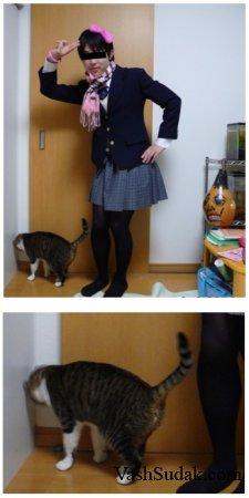 Даже кошки не могут это терпеть!