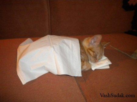 Постель для котенка