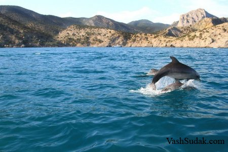 Дельфины Афалина