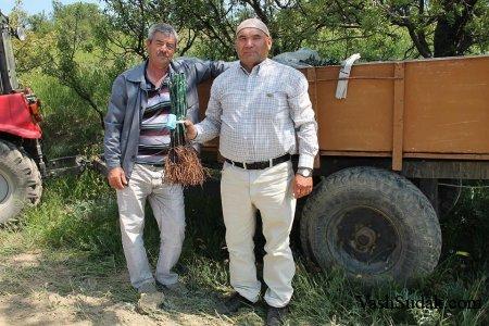 В Солнечной Долине высадили 120 тысяч саженцев винограда.