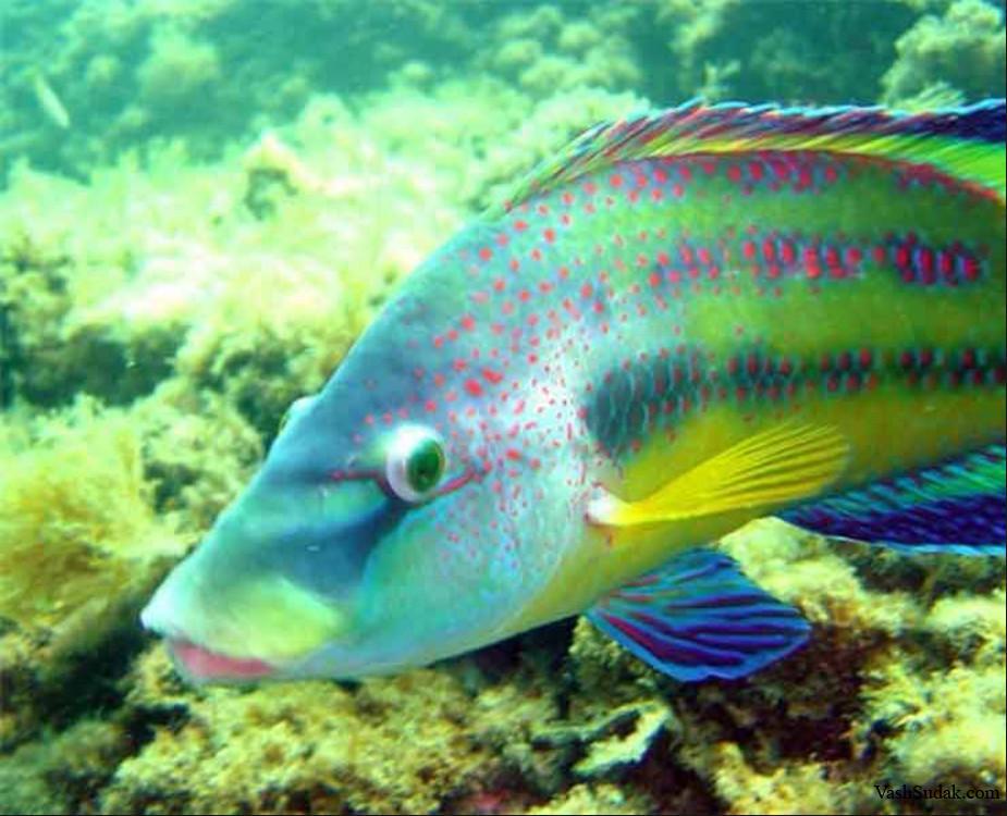 рыба черного моря фото и названия сотрите