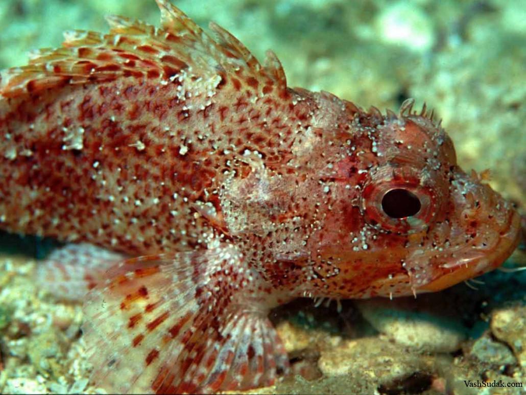 Рыба черного моря фотографии биография