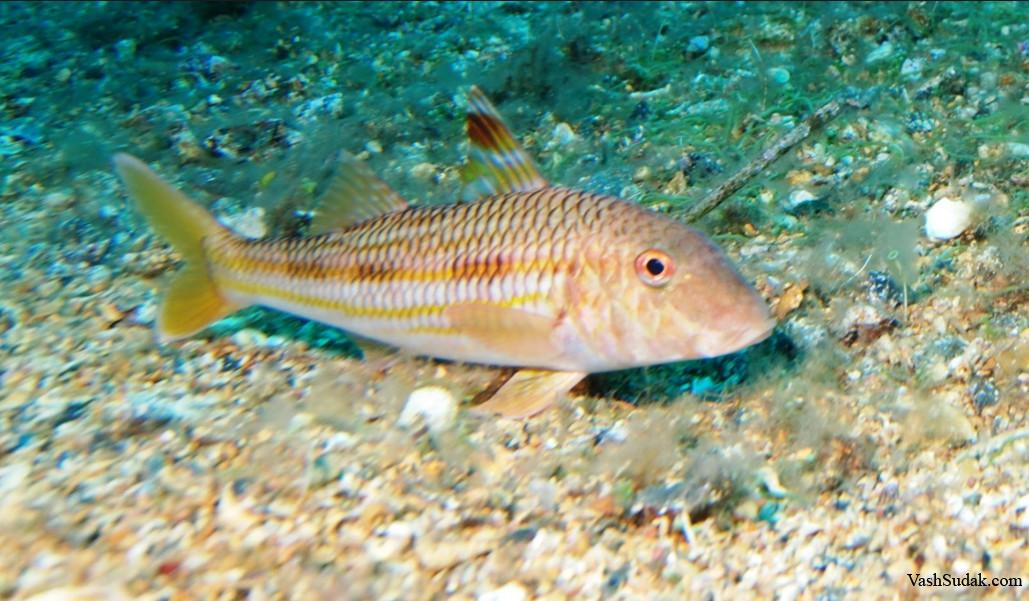 Рыбы в черном море фото