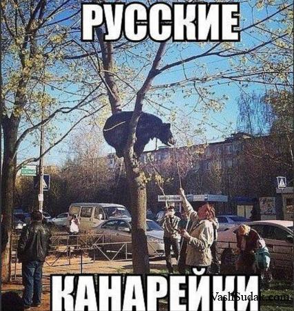Лучшие канарейки в Мире :)))