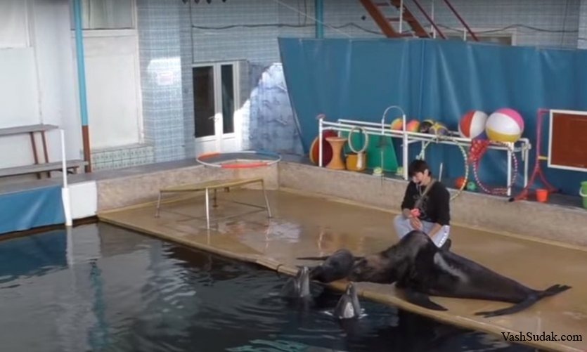 Карадагский Дельфинарий. Курортное