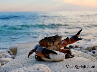 Животные и растения каменистого мелководья Черного моря.